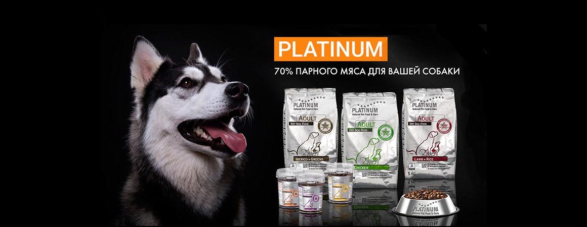 platinum_dog